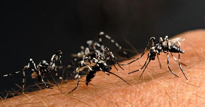 Alcuni rimedi naturali contro mosche e zanzare