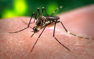 Preoccupante diffusione del virus West Nile: ALLERTA COMUNI