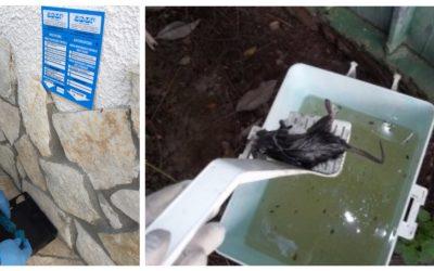 Manfredonia: GIMAR promuove la Derattizzazione Ecologica