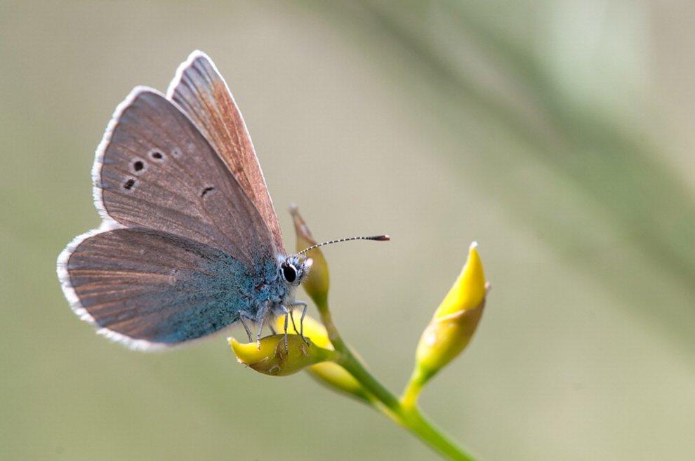 Prima di dichiarare guerra agli insetti cerchiamo di capire il loro mondo